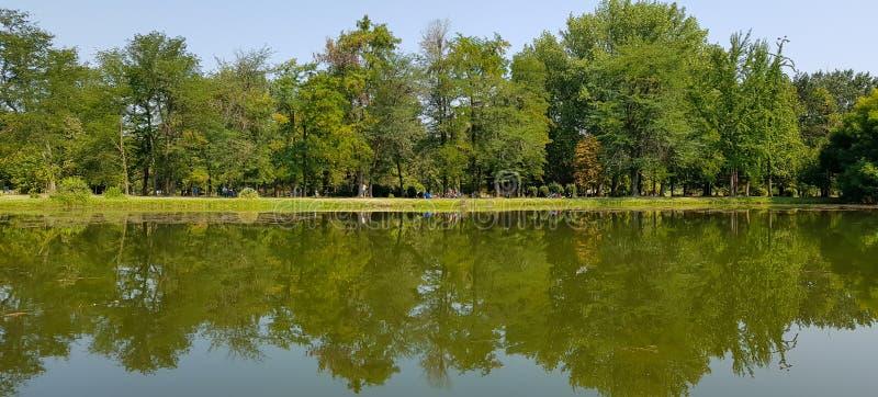 Piccolo bello lago di panorama con la riflessione di grandi alberi verdi vicini fotografia stock libera da diritti