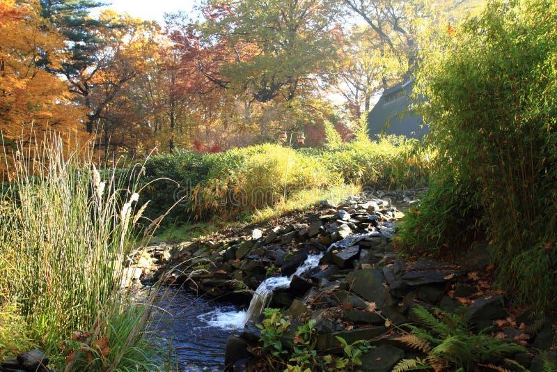 Piccolo brooklet di autunno immagini stock libere da diritti