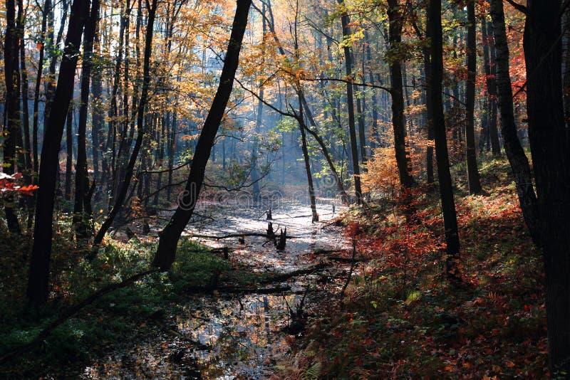 Piccolo brooklet di autunno immagine stock libera da diritti