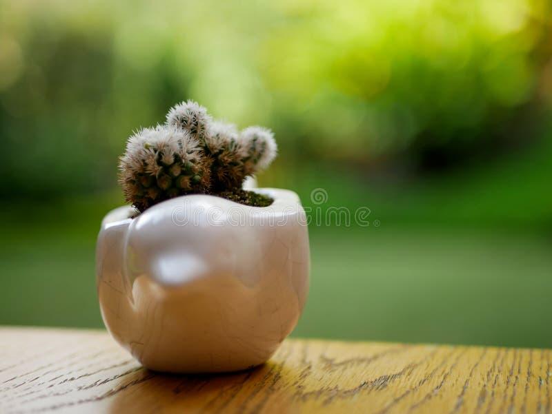 Piccolo cactus piantato su un vaso bianco birdshaped con un giardino vago sulla vista frontale del fondo immagine stock