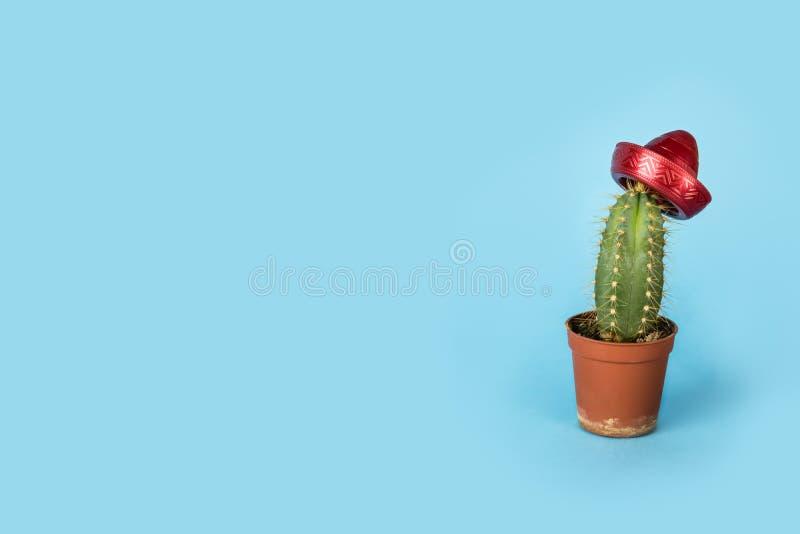 Piccolo cactus sveglio che porta un sombrero rosso - fondo divertente di siesta immagini stock