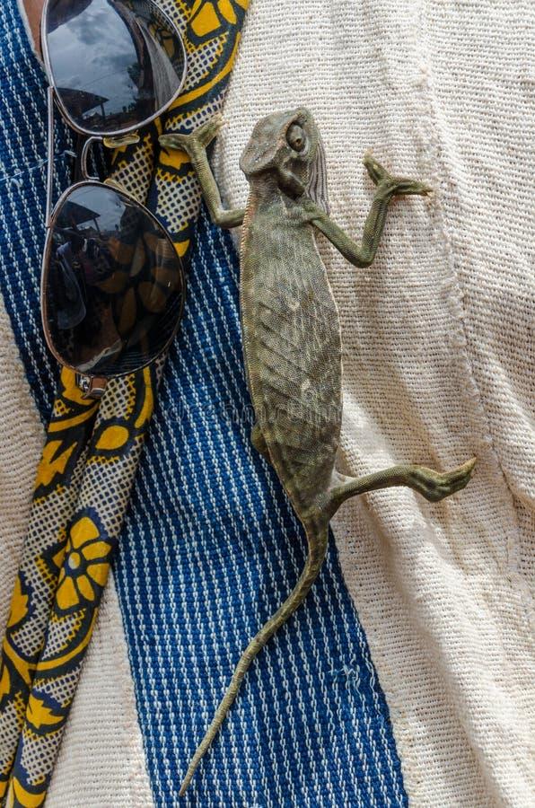 Piccolo camaleonte verde che scala camicia accanto agli occhiali da sole fotografia stock libera da diritti