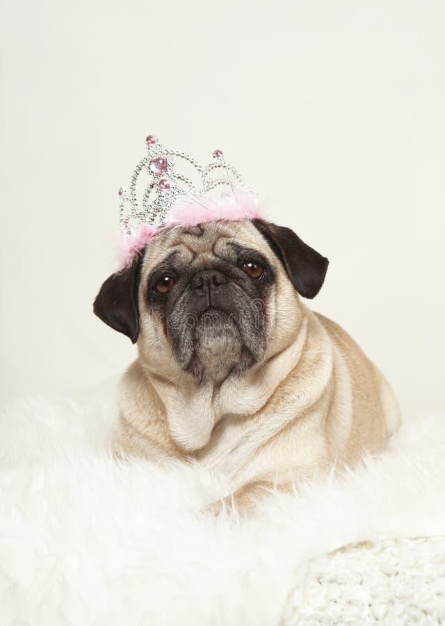 Piccolo cane che si trova sulla pelliccia bianca fotografia stock libera da diritti