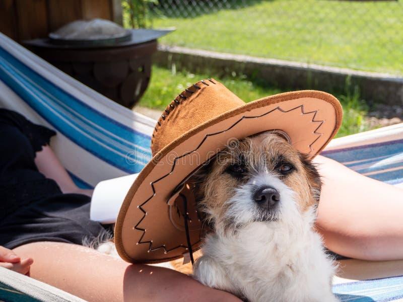 Piccolo cane con il cappello del sole in un'amaca immagine stock