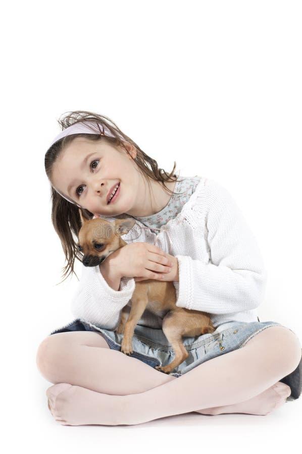 Piccolo cane dolce immagine stock libera da diritti