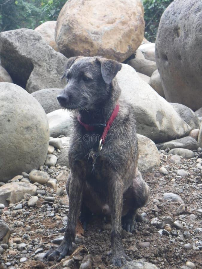 Piccolo cane marrone che si siede sulla spiaggia fotografie stock libere da diritti