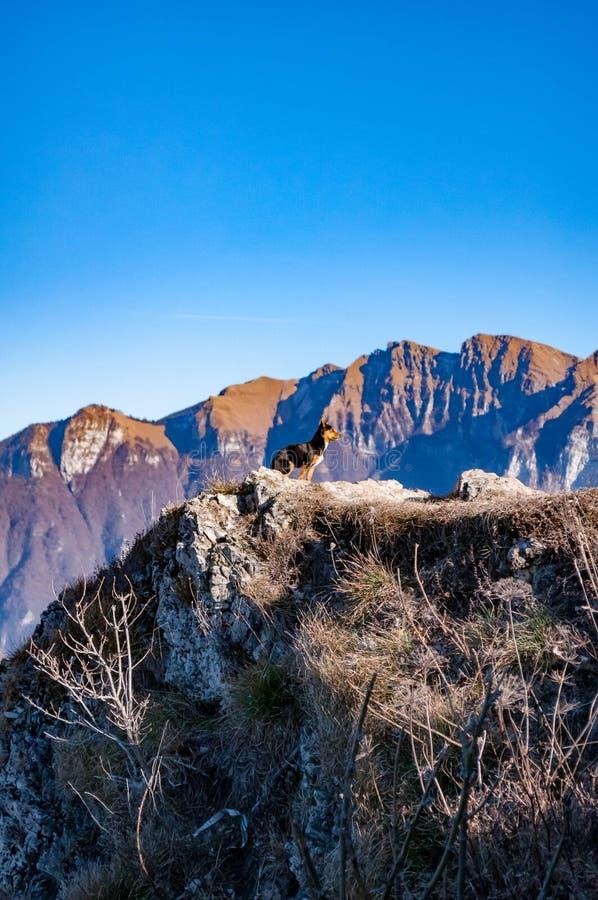 Piccolo cane nelle montagne sopra una scogliera fotografie stock libere da diritti