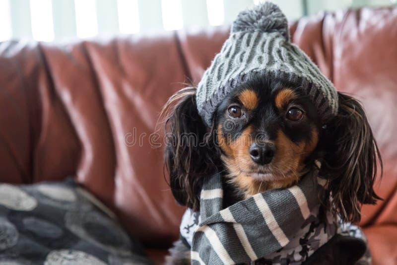 Piccolo cane su uno strato con l'ingranaggio di inverno sopra fotografia stock libera da diritti