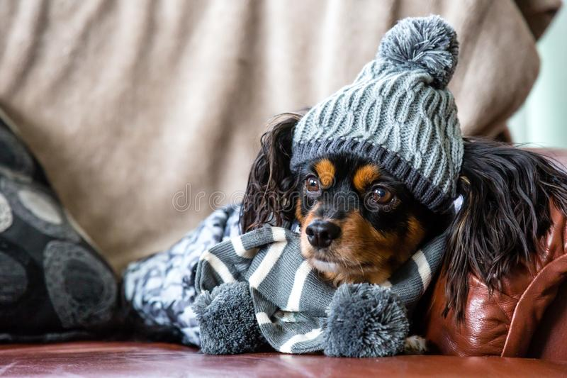 Piccolo cane su uno strato con l'ingranaggio di inverno sopra fotografia stock