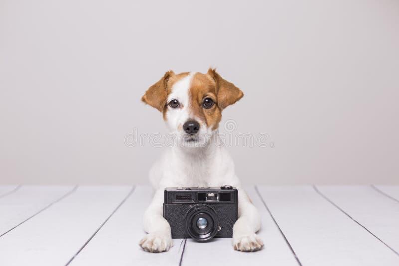 Piccolo cane sveglio che si siede sul pavimento bianco Sguardo intelligente e curioso Macchina fotografica d'annata oltre lui Ani immagine stock