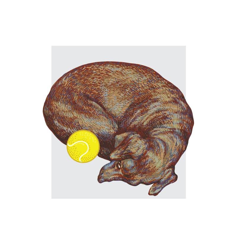 Piccolo cane sveglio che si trova con una pallina da tennis Vettore realistico disegnato a mano royalty illustrazione gratis