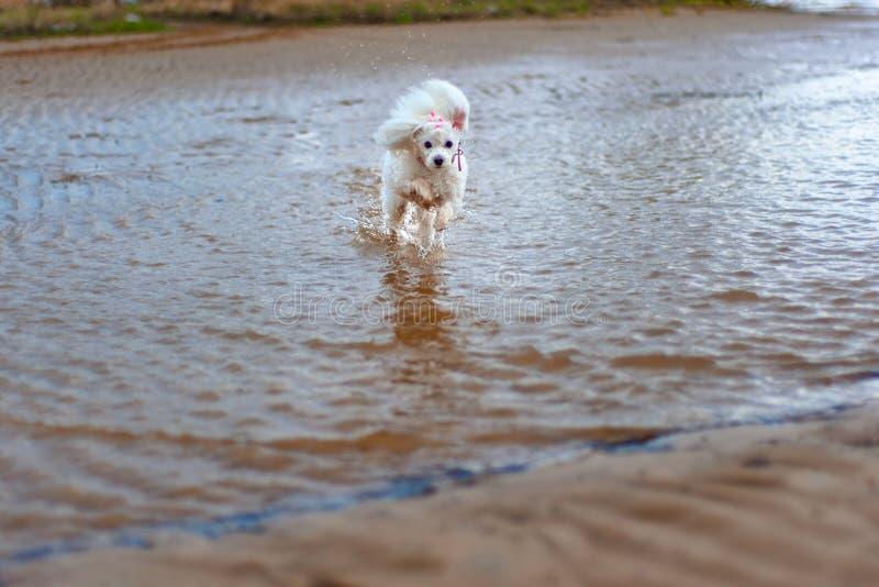 Piccolo cane in un mondo enorme fotografia stock