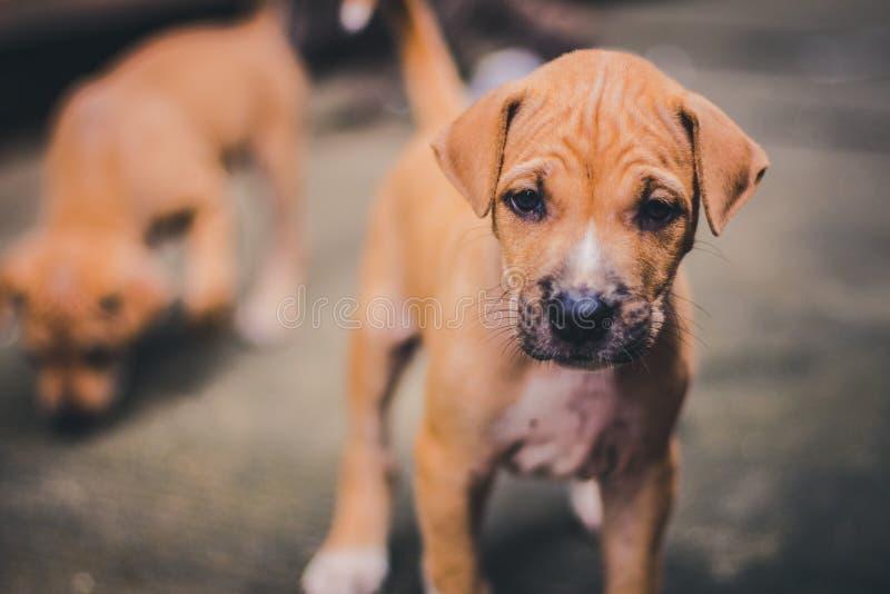 Piccolo cercare sveglio del cucciolo di cane immagini stock libere da diritti