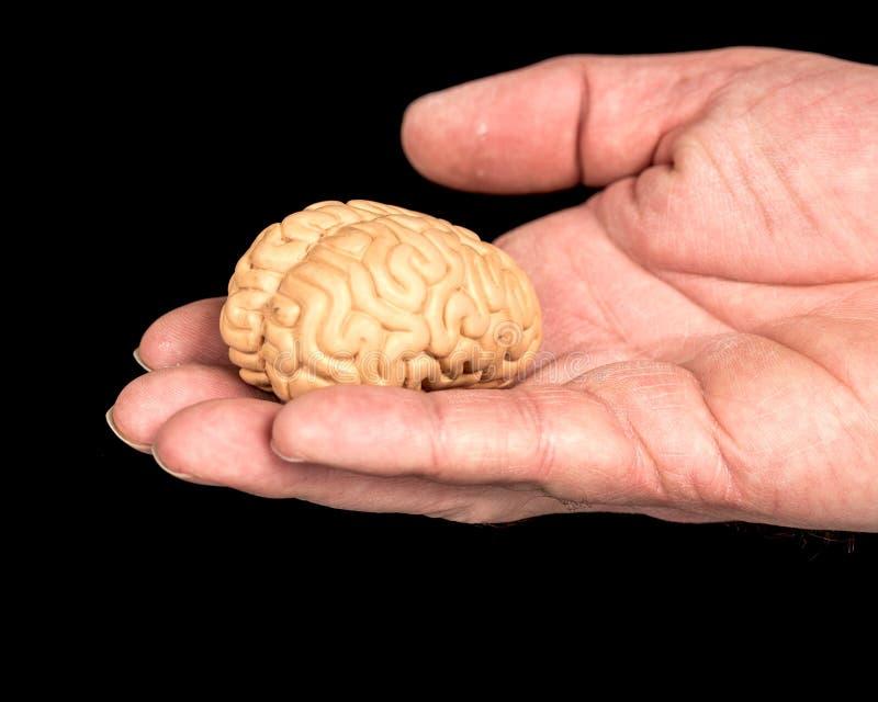 Piccolo cervello del giocattolo tenuto in una mano fotografia stock libera da diritti