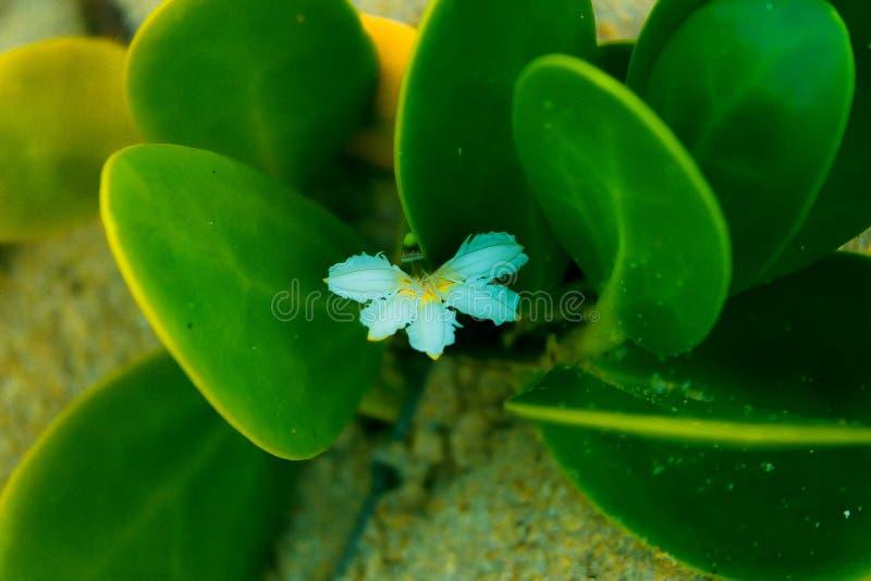 Piccolo con il restinga del fiore della riva fotografie stock