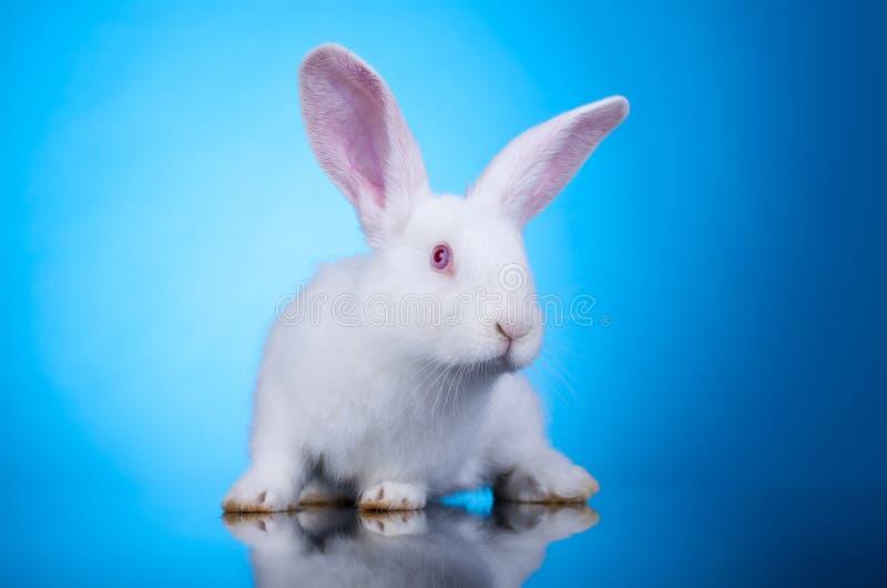 Piccolo coniglietto curioso fotografia stock libera da diritti