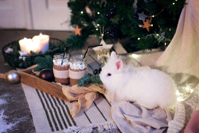 Piccolo coniglio bianco sul fondo del nuovo anno immagine stock libera da diritti