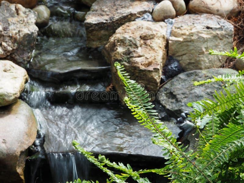 Piccolo corso d'acqua con l'ardesia e rocce e Fern Frond fotografie stock libere da diritti