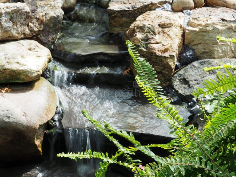 Piccolo corso d'acqua con l'ardesia e rocce e Fern Frond fotografia stock