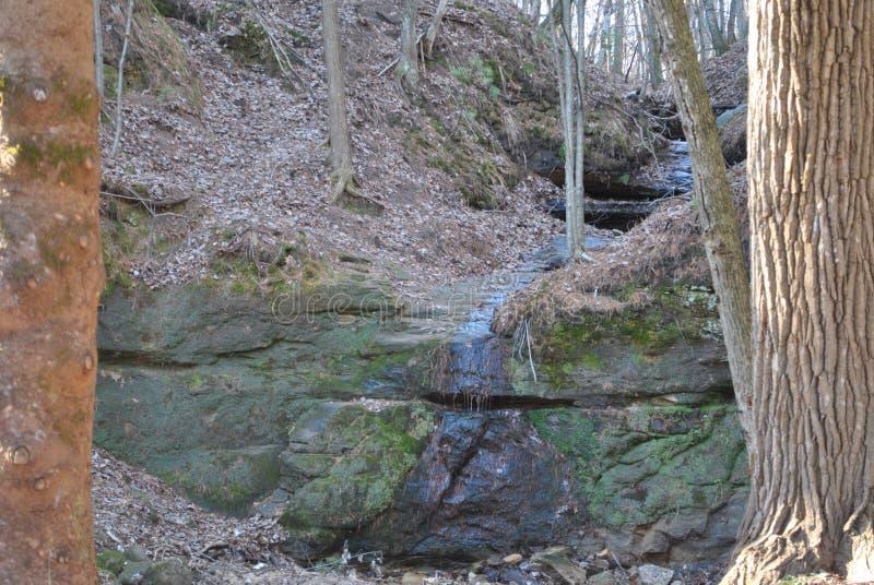 Piccolo corso d'acqua descritto dagli alberi fotografie stock libere da diritti