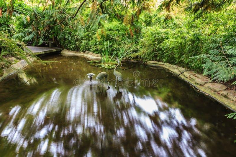 Piccolo corso d 39 acqua in giardino giapponese fotografia stock immagine di canada decorazione - Giardino d acqua ...