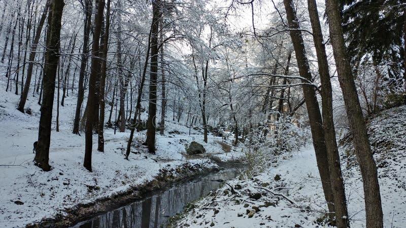 Piccolo corso d'acqua in un legno nell'inverno fotografia stock libera da diritti
