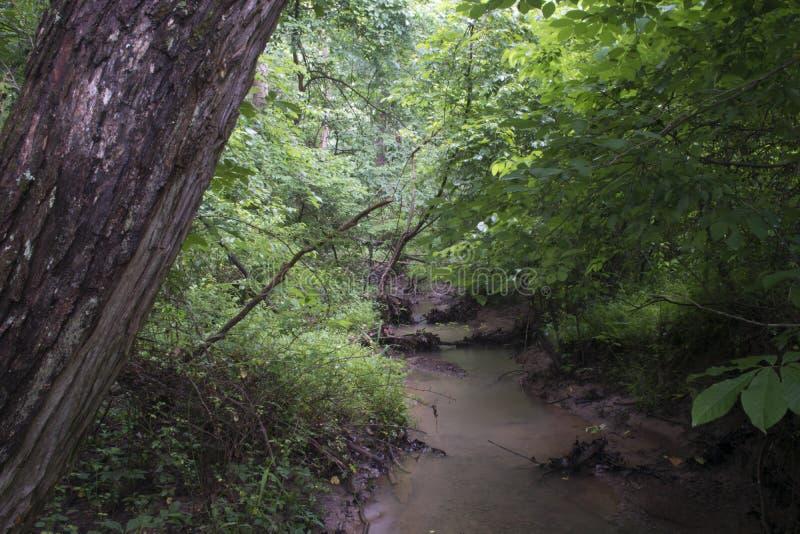 Piccolo corso d'acqua in una foresta in pioggia persistente immagine stock libera da diritti