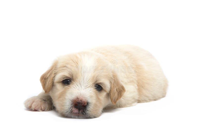 Download Piccolo cucciolo fotografia stock. Immagine di bianco - 3148222