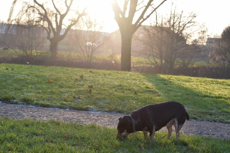 Piccolo cucciolo al tramonto immagine stock libera da diritti