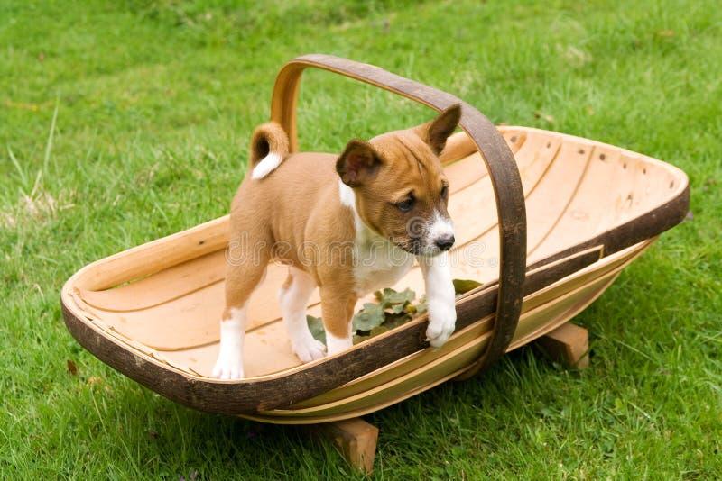 Piccolo cucciolo che si leva in piedi nel trug fotografia stock libera da diritti