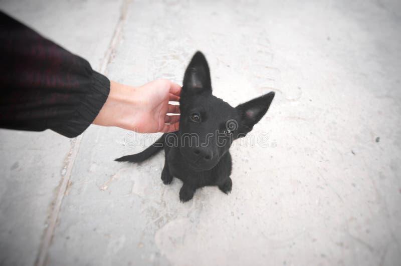 Piccolo cucciolo nero che si siede su una strada e che esamina macchina fotografica fotografie stock libere da diritti