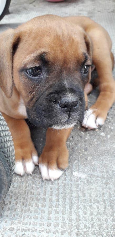 Piccolo cucciolo fotografie stock libere da diritti