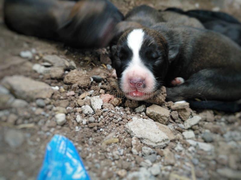 Piccolo cucciolo sveglio del cane fotografia stock