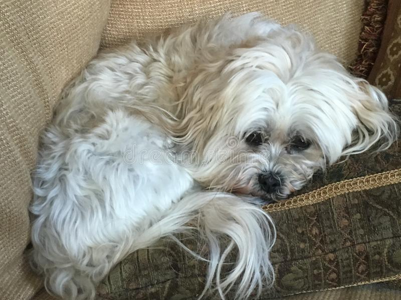 Piccolo cucciolo triste di aspetto fotografia stock libera da diritti