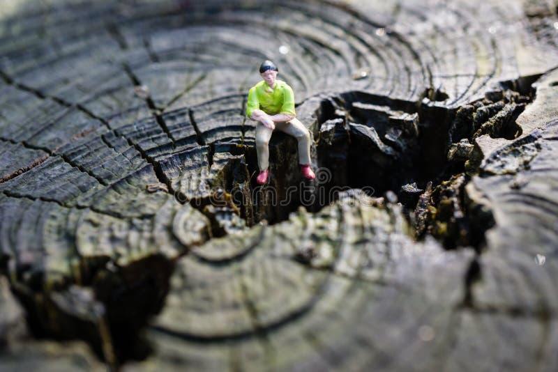 Piccolo dipenda il ceppo di albero immagine stock