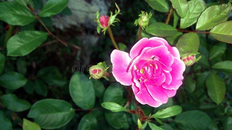 Piccolo fiore dentellare fotografie stock libere da diritti