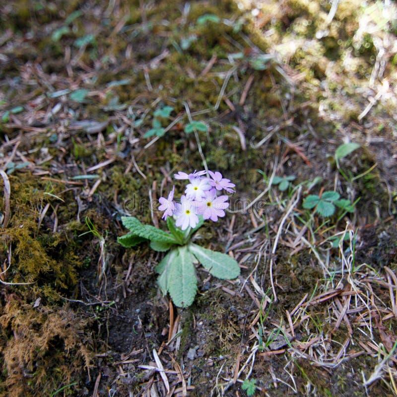 Piccolo fiore dentellare immagini stock