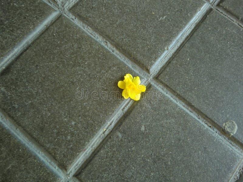 Piccolo fiore giallo solo sulla pavimentazione fotografie stock