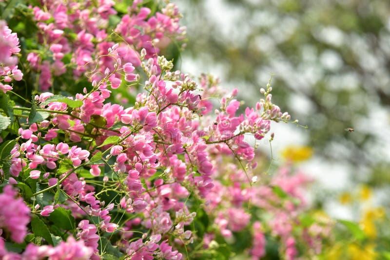 piccolo fiore rosa del fiore sul suo albero nella primavera fotografia stock
