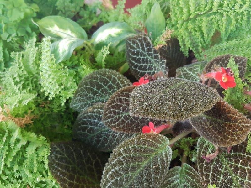 Piccolo fiore rosso fotografie stock