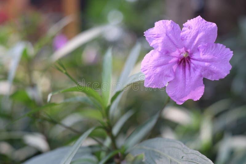 Piccolo fiore viola fotografie stock