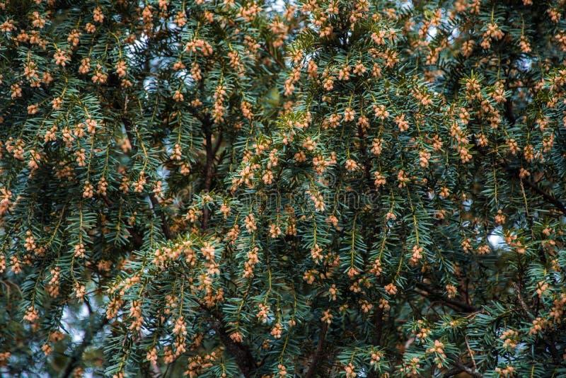 Piccolo fiori arancio che fioriscono dal lato della strada fotografia stock libera da diritti