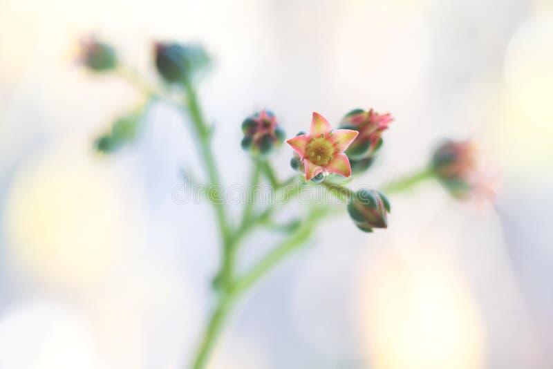 Piccolo fiori svegli spiega il mazzo, macro leggera fotografia stock libera da diritti
