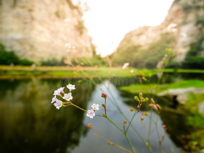 Piccolo fiorisce dal lato il lago e la montagna nel fondo fotografie stock