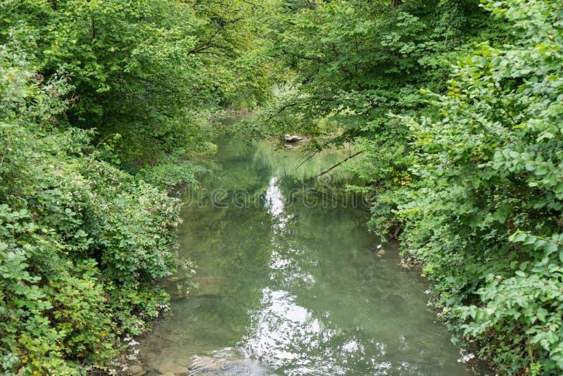 Piccolo fiume che passa foresta fotografia stock libera da diritti