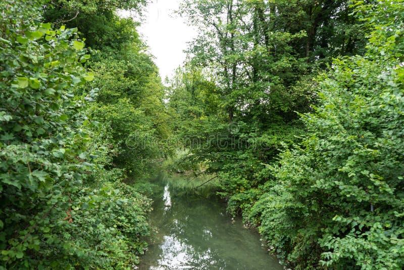 Piccolo fiume che passa foresta immagine stock libera da diritti