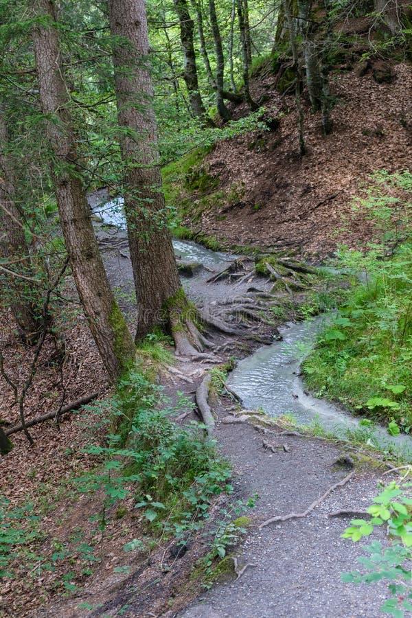 Piccolo fiume che passa foresta fotografie stock