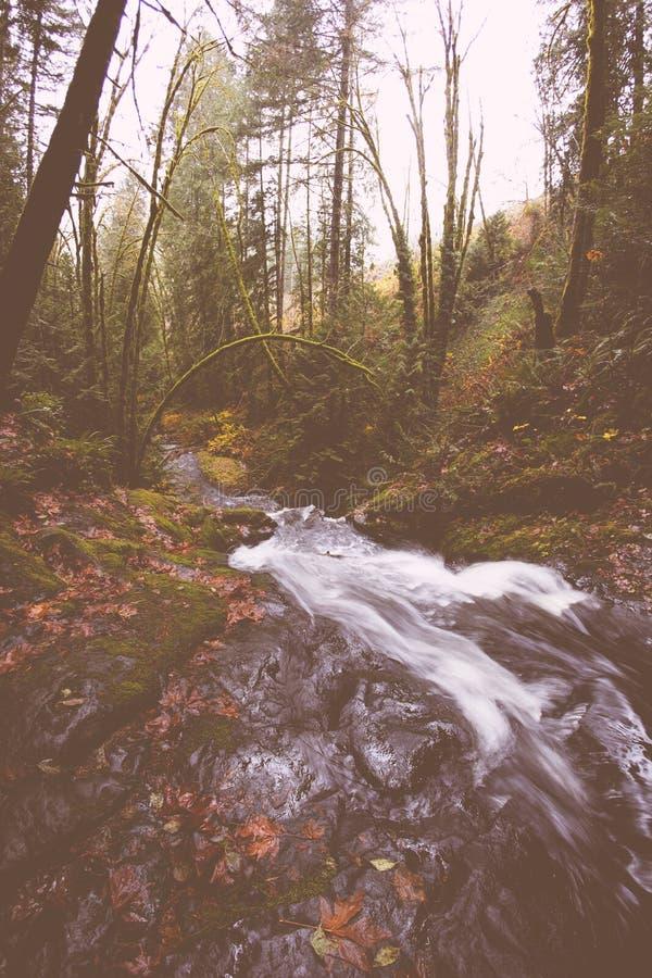 Piccolo fiume che passa una foresta fotografie stock