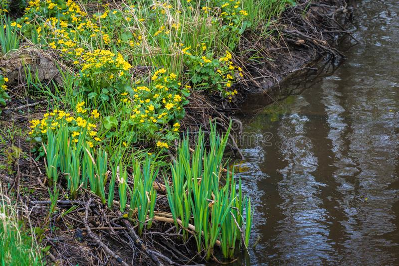 Piccolo fiume con molte radici della pianta fotografia stock