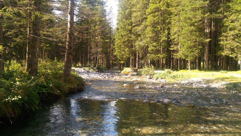 Piccolo fiume su Alpes fotografie stock